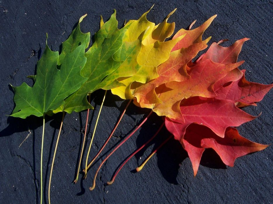 multicolor leaves spectrum macro wallpaper