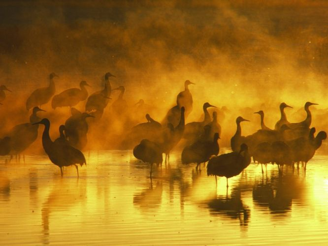 sand birds fog cranes wallpaper