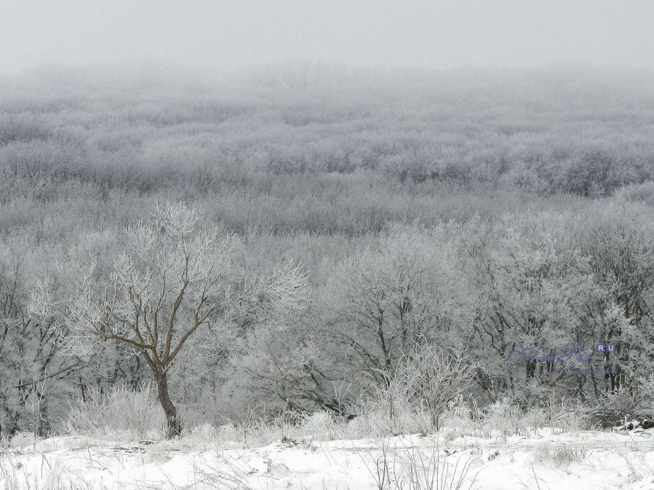 landscapes nature forests snow landscapes wallpaper