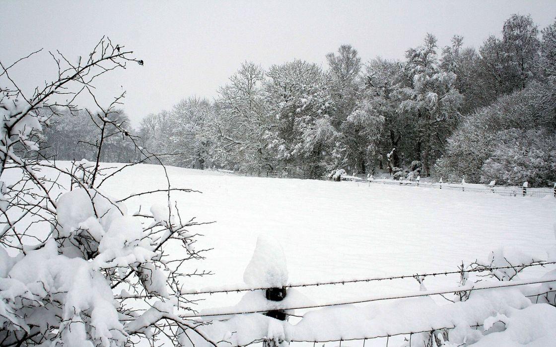 nature winter wallpaper