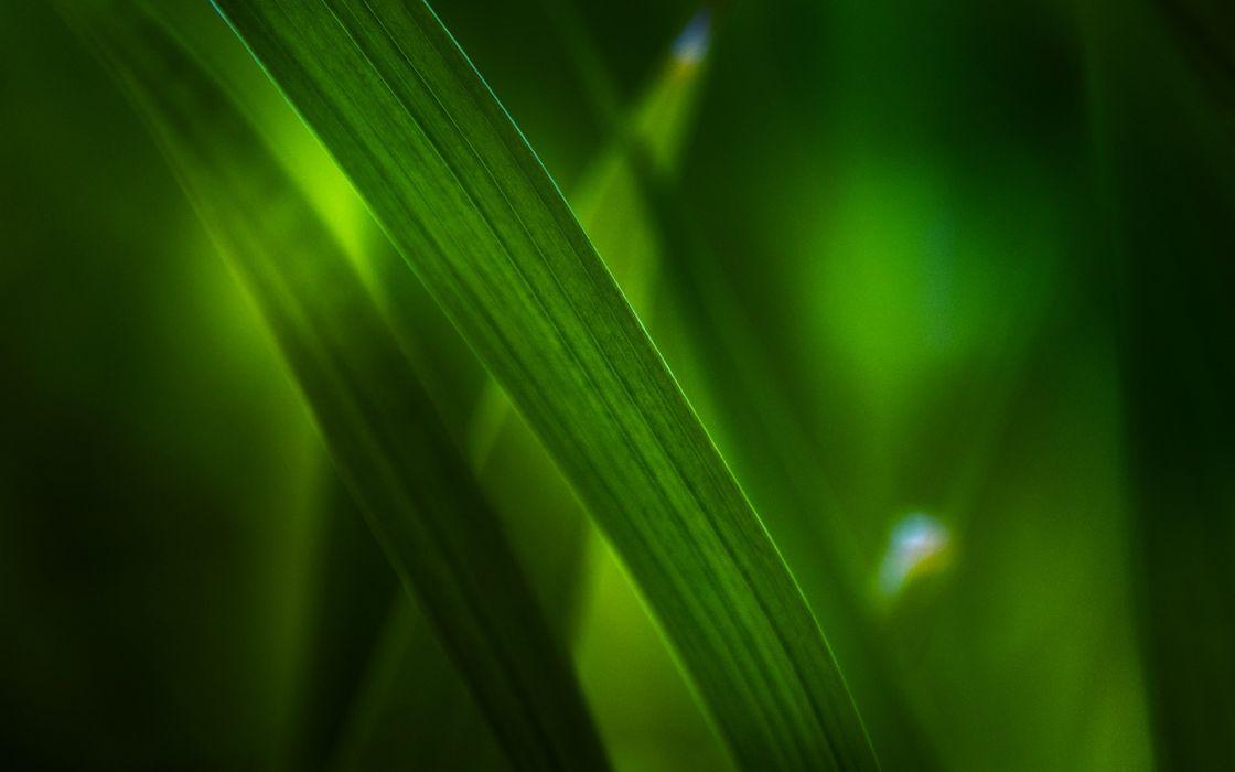 nature leaves grass macro wallpaper