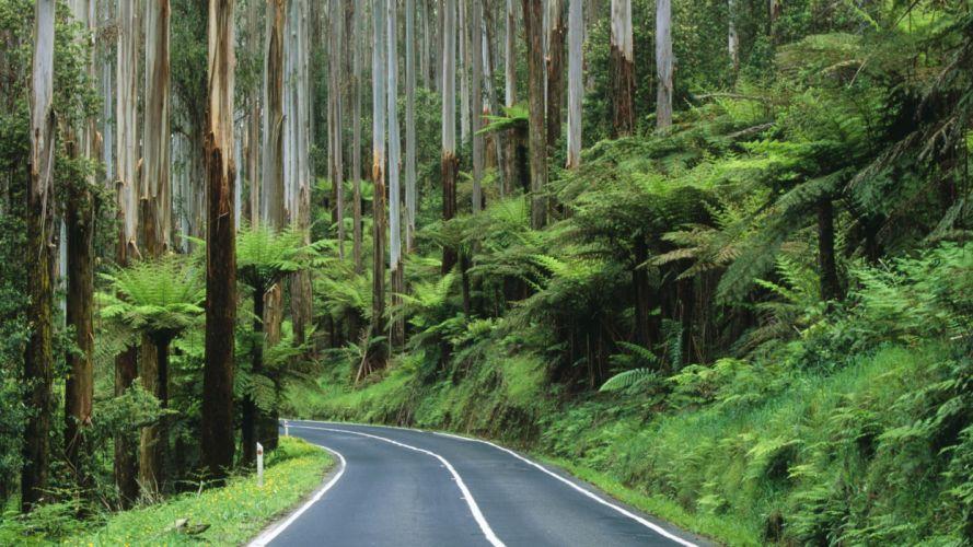 roads Australia National Park rainforest wallpaper