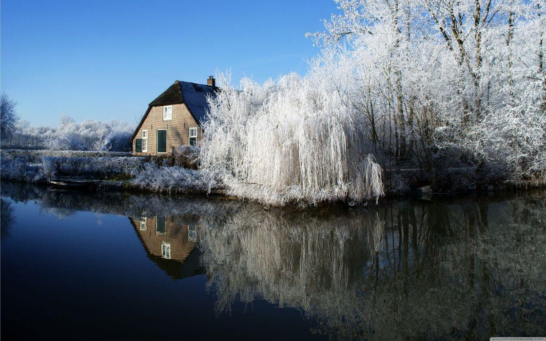 winter trees frosty farmhouse wallpaper