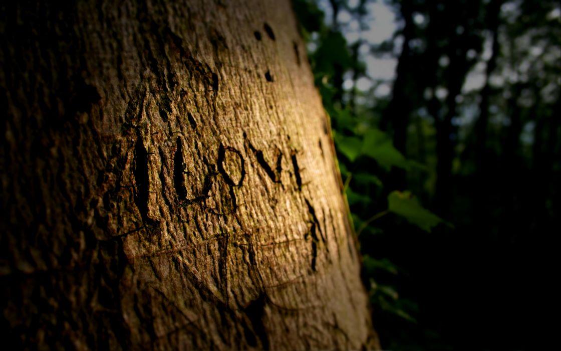 love trees wallpaper
