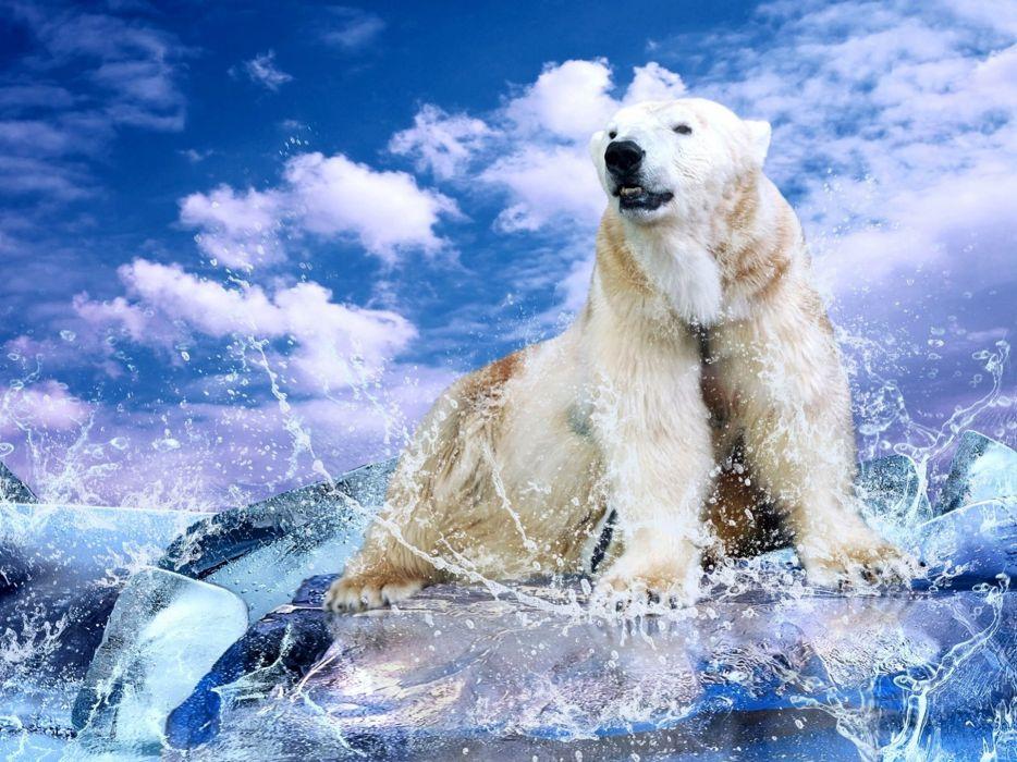 water clouds animals polar bears wallpaper