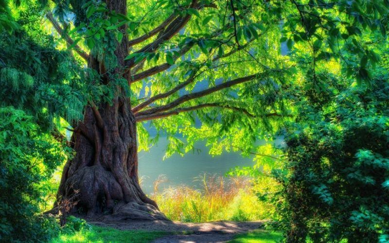 light summer branches colors trunk wallpaper