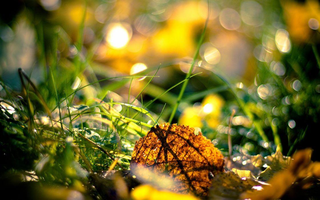 nature drop tree leaf sun beam autumn hd wallpaper wallpaper