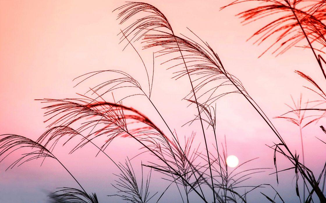 nature grass color sunset landscape ultrahd 4k wallpaper wallpaper