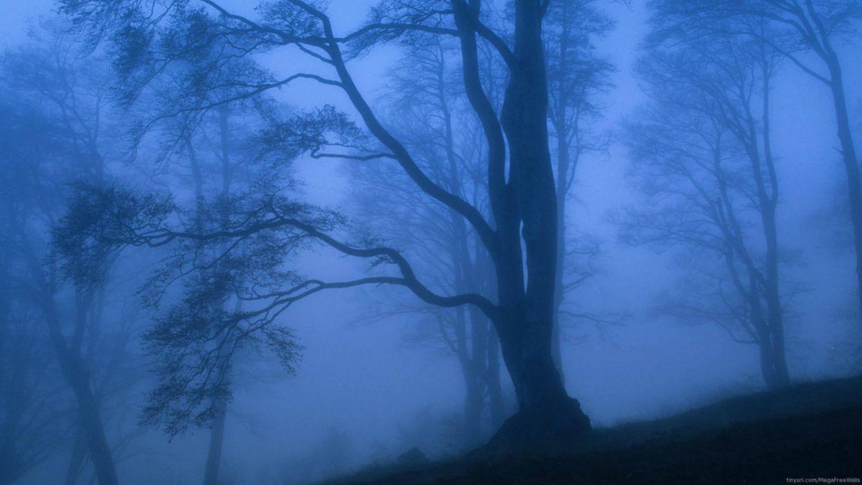 nature mountain forest landscape fog ultrahd 4k wallpaper wallpaper