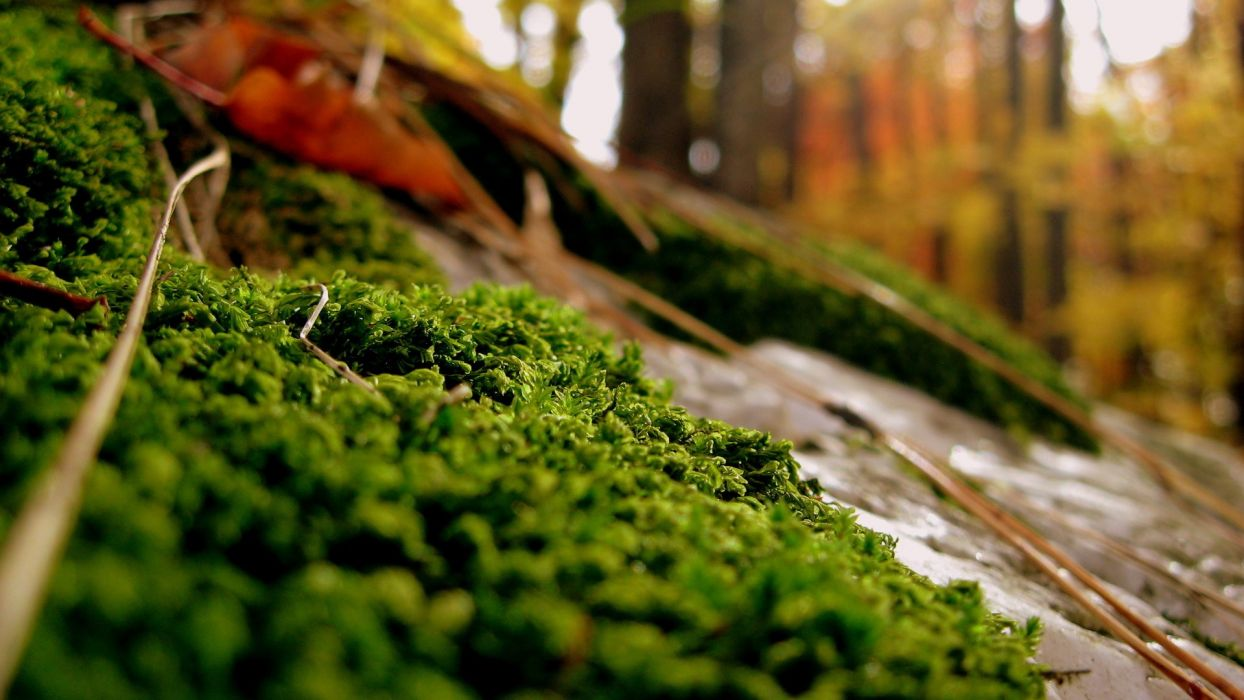 close-up nature forests plants moss wallpaper