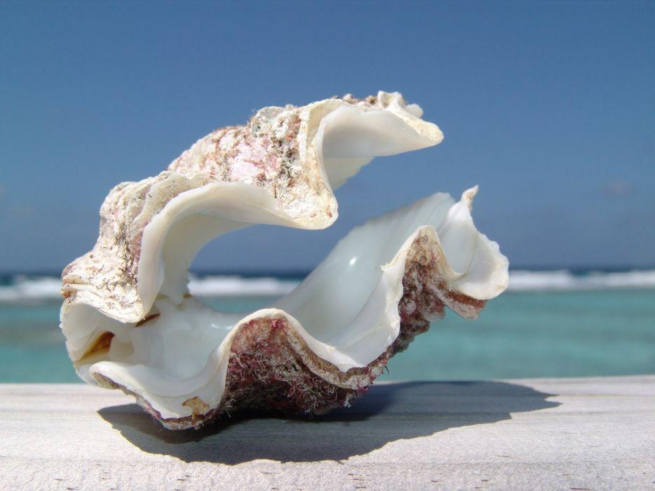 ocean seashells depth of field blue skies wallpaper