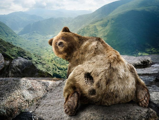 mountains funny bears wallpaper