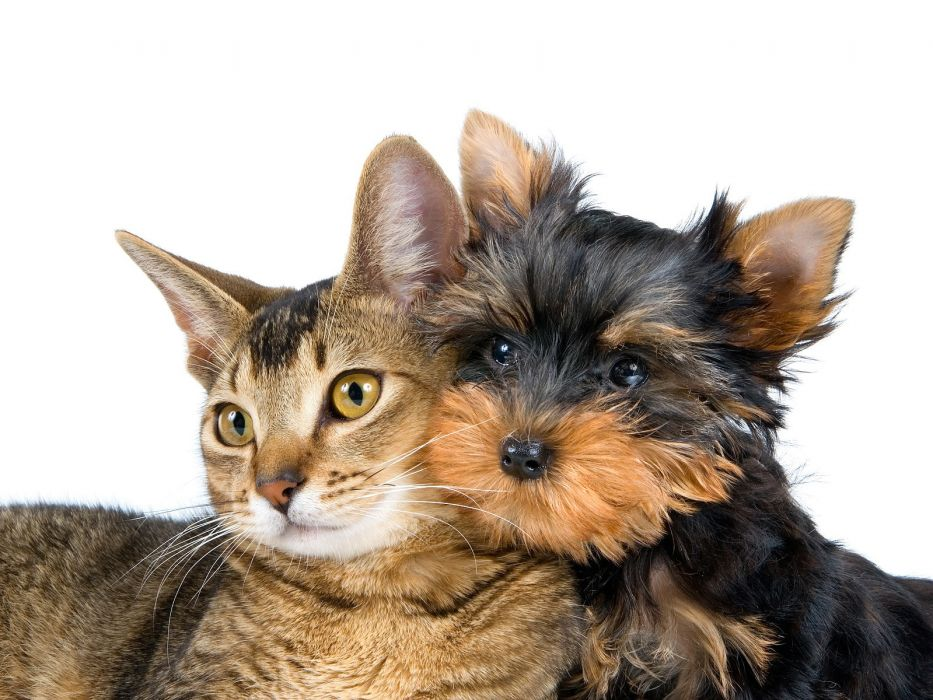 cats animals dogs white background wallpaper