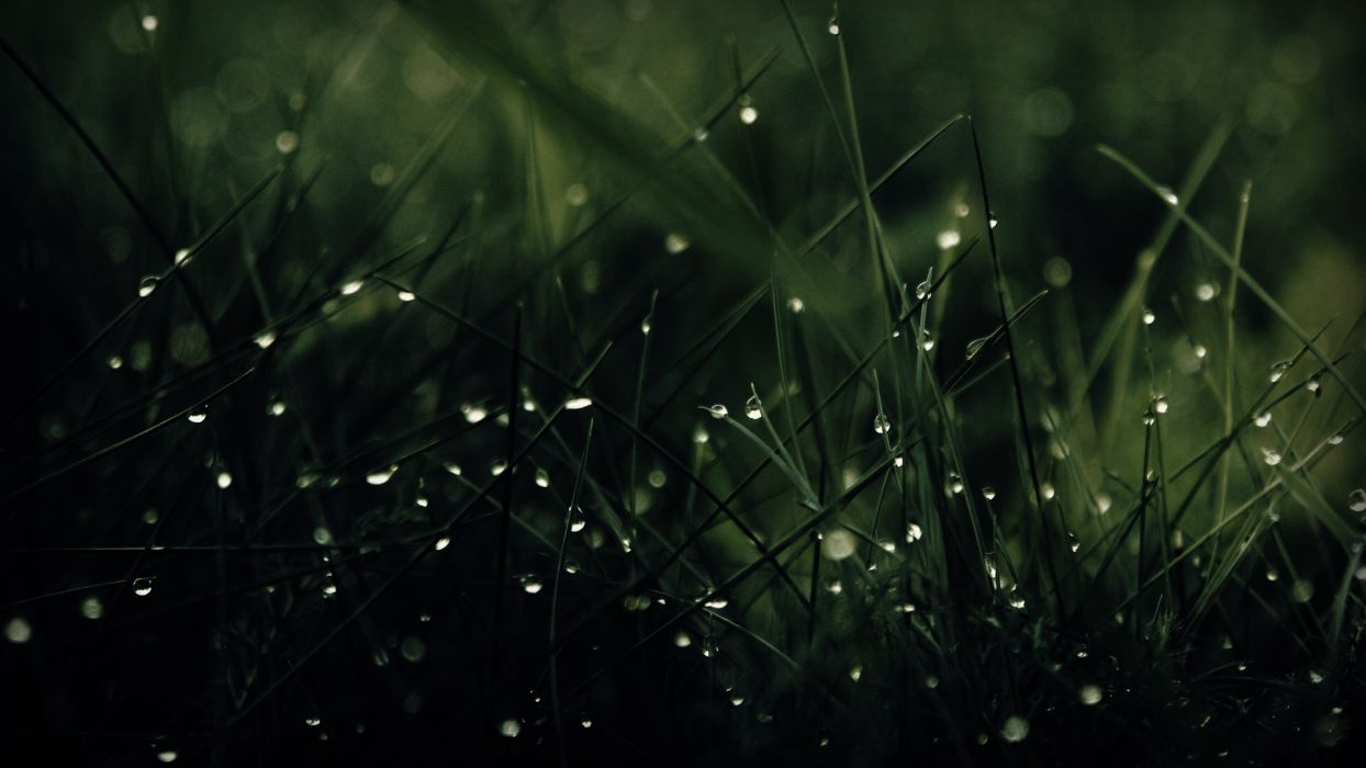 green nature rain grass water drops wallpaper