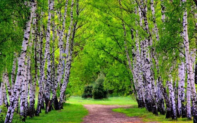 nature trees paths wallpaper