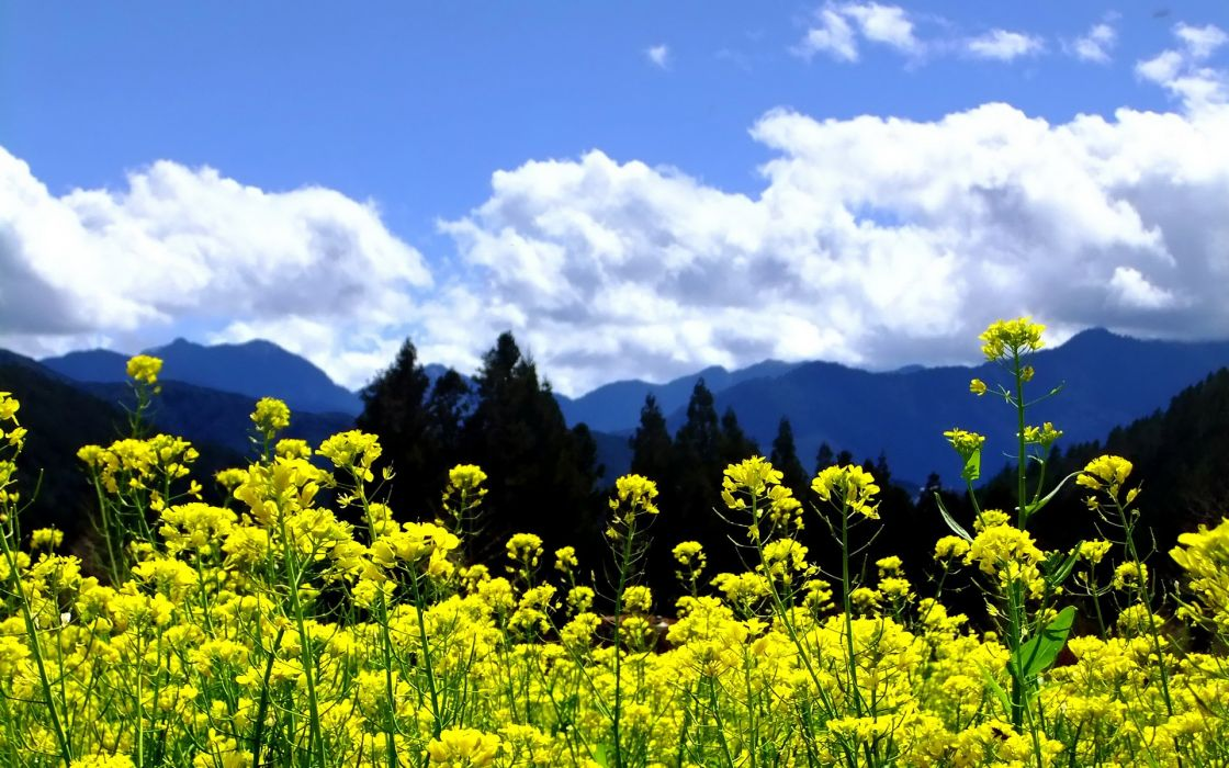 mountains clouds landscapes nature trees flowers yellow flowers skies wallpaper