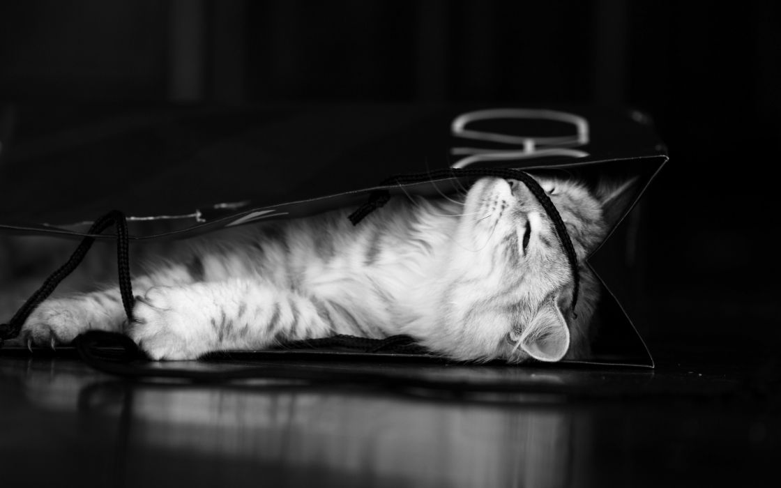 cats animals monochrome kittens wallpaper