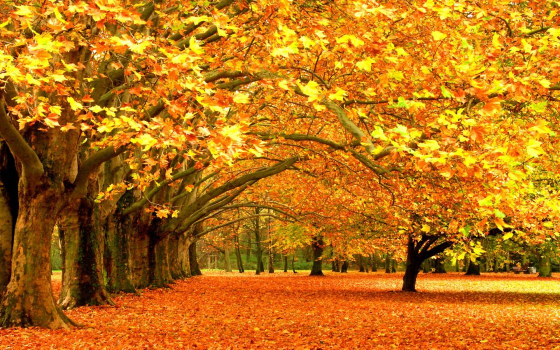 trees autumn leaves fallen leaves wallpaper