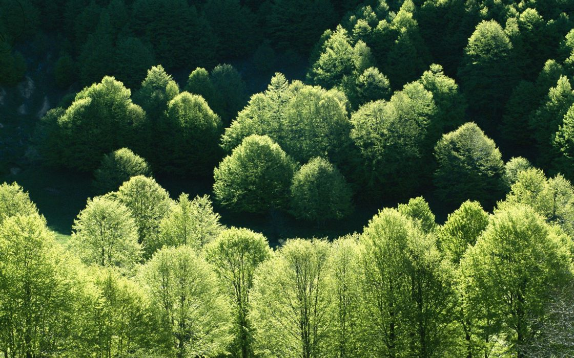 green landscapes nature trees forests leaves wildlife wallpaper