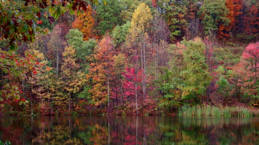 water landscapes nature trees autumn forests plants lakes colors wallpaper