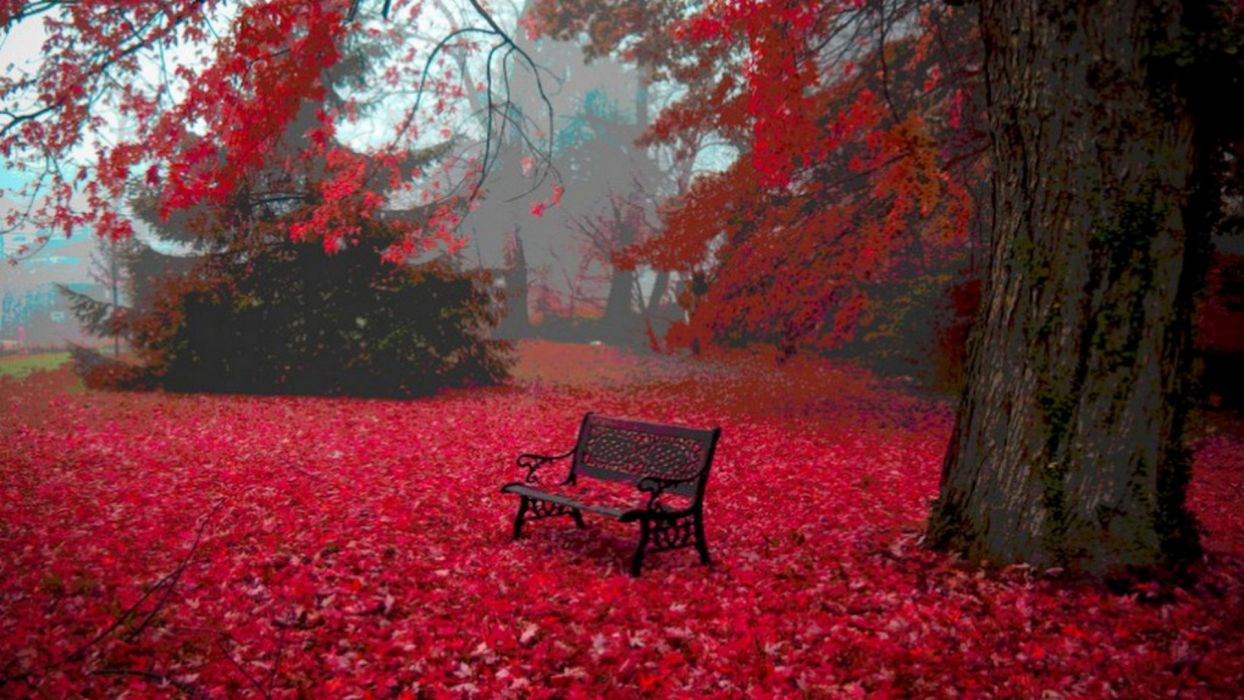landscapes autumn bench wallpaper