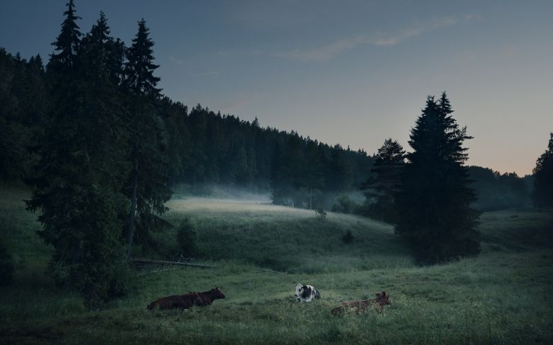 landscapes nature trees forests animals cows wallpaper