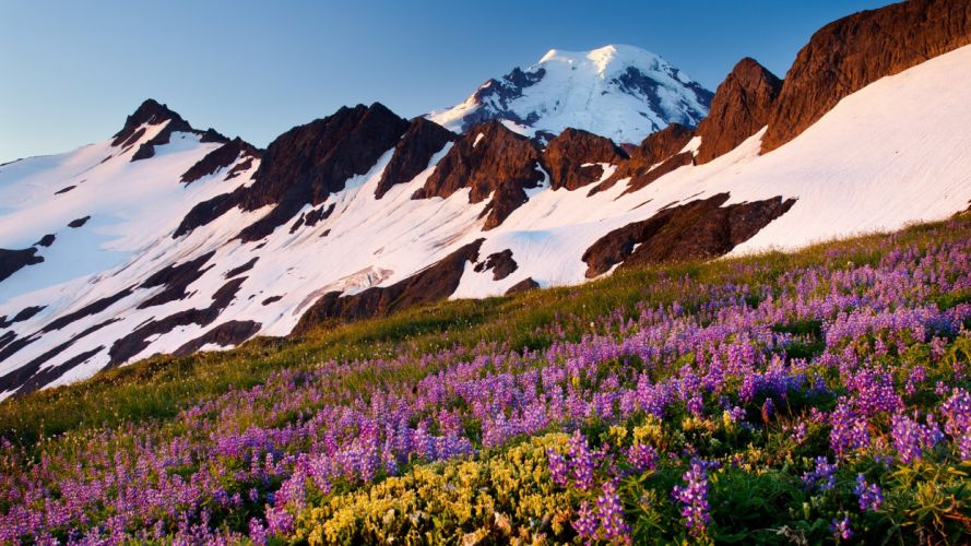 landscapes Baker Washington Mount Lupine wallpaper