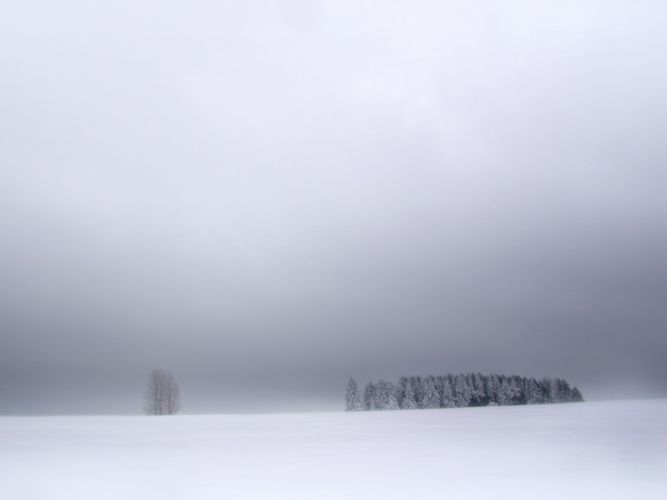 nature winter snow white fog outdoors plants snow landscapes wallpaper