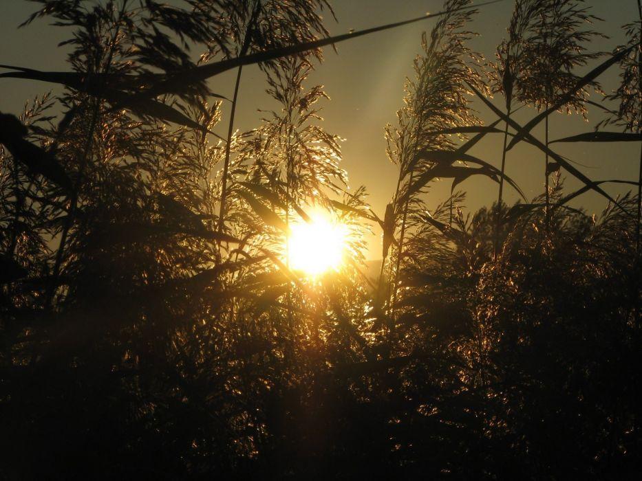 sunset sunrise landscapes nature Sun trees wallpaper