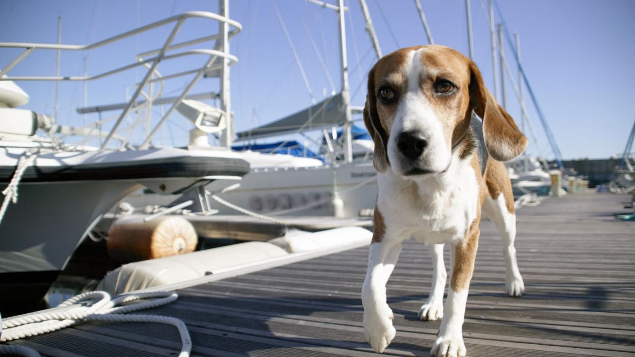 dogs harbours wallpaper