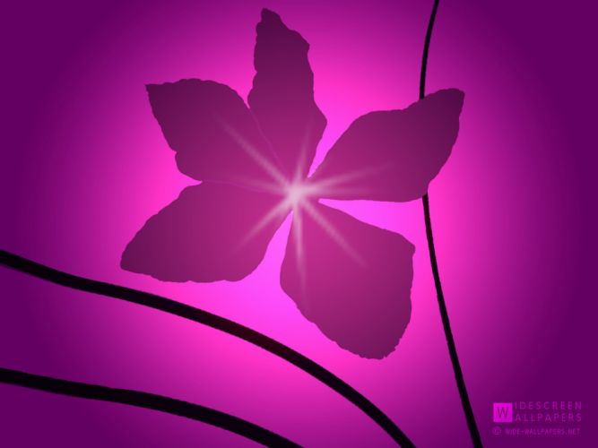 flowers design clematis wallpaper