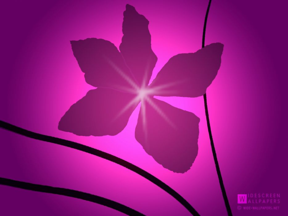flowers design clematis wallpaper