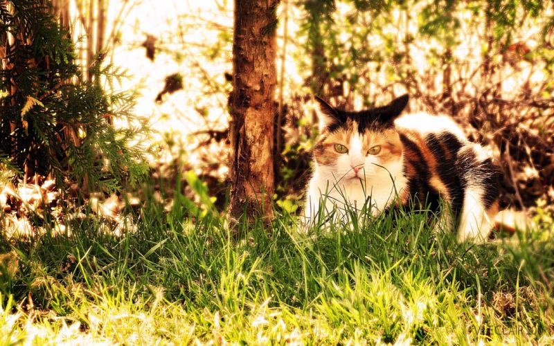 wood forests cats animals grass wallpaper