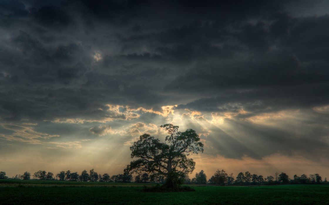 nature trees skyscapes wallpaper