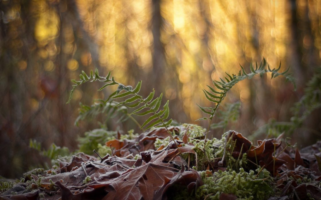 forests plants wallpaper