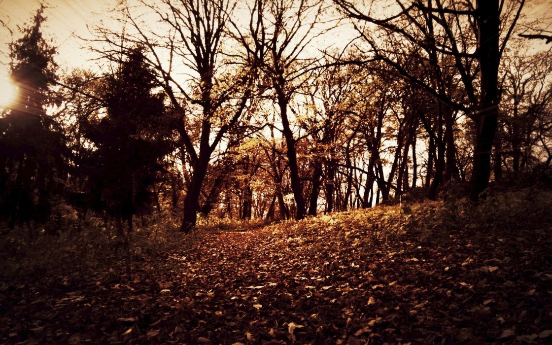autumn forests leaves wallpaper