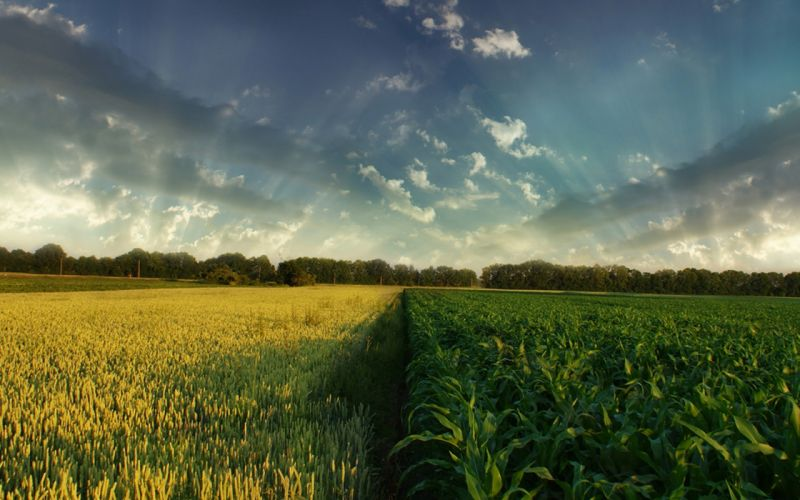 landscapes nature fields HDR photography crops wallpaper