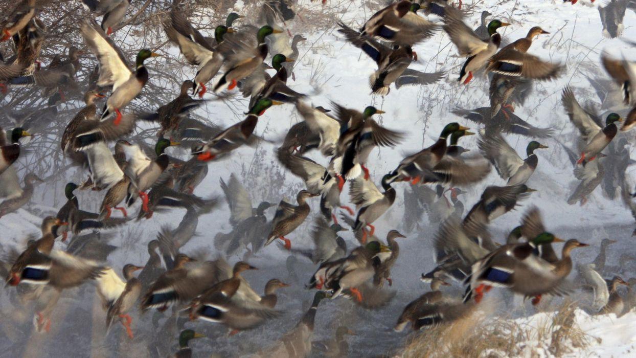 flock wallpaper