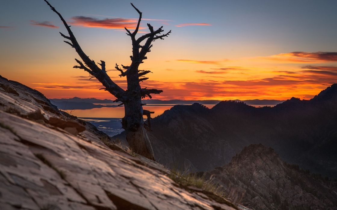 landscapes nature trees dawn skyscapes wallpaper