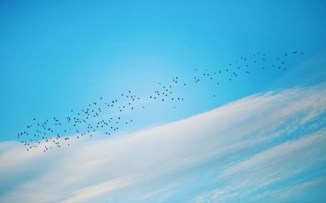 clouds birds swarm skyscapes wallpaper