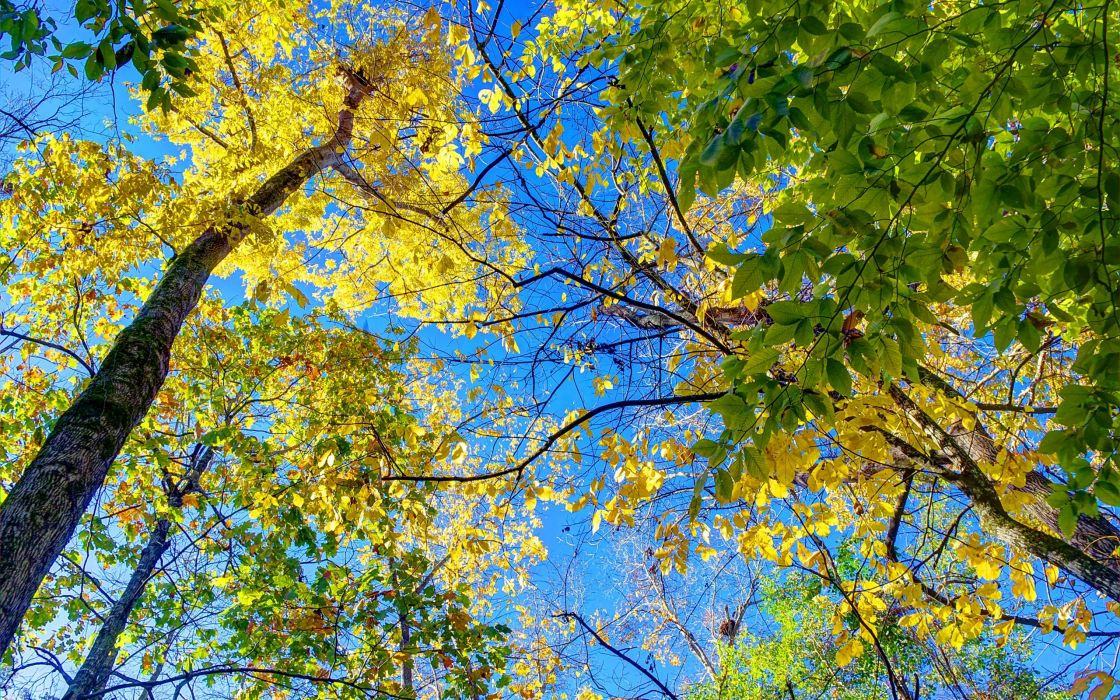 autumn trees nature    h wallpaper