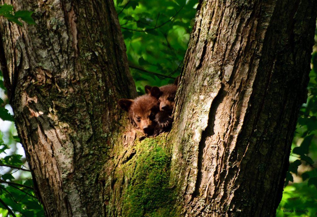 bear baby forest tree wallpaper