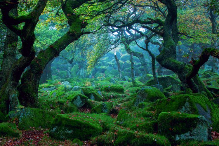 forest tree moss wallpaper