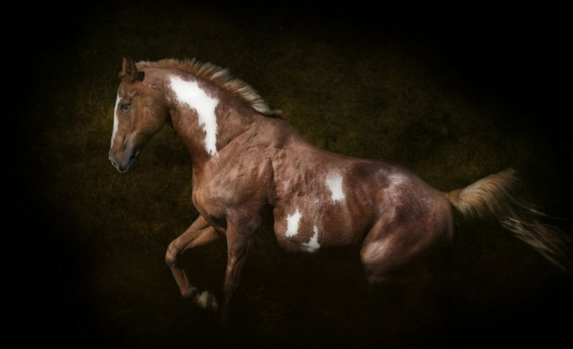 horse black bokeh wallpaper