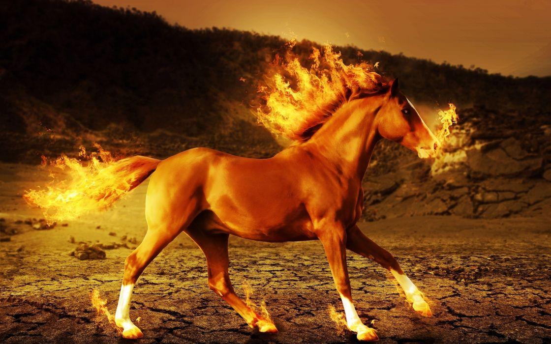 horse fire 3d art psychedelic      g wallpaper