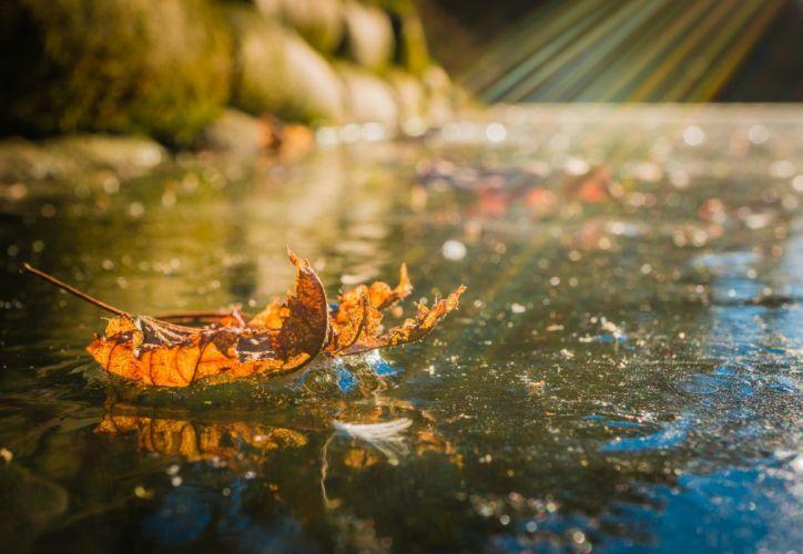 leaf ice cold light macro bokeh autumn wallpaper