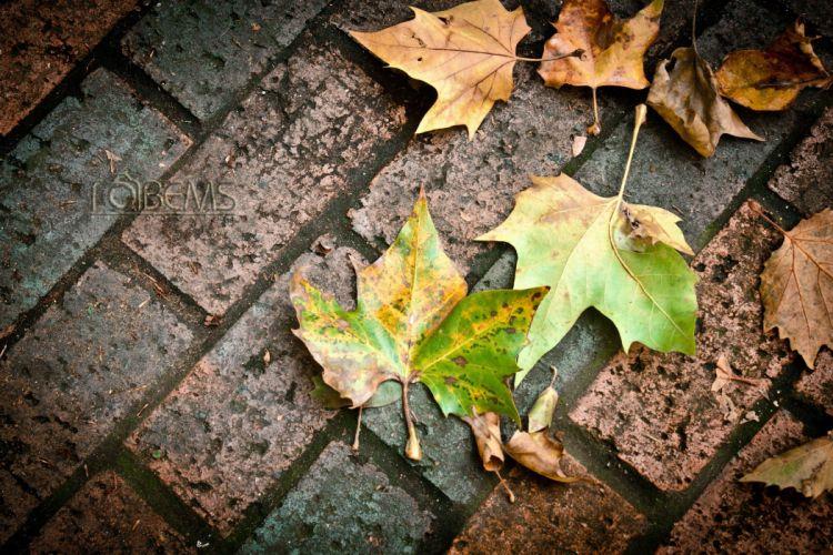 leaves autumn tiling macro bokeh wallpaper