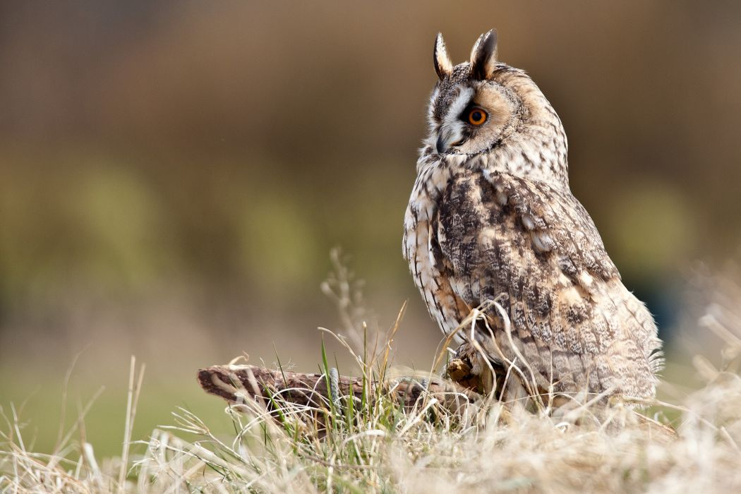 stump owl wading bird grass wallpaper