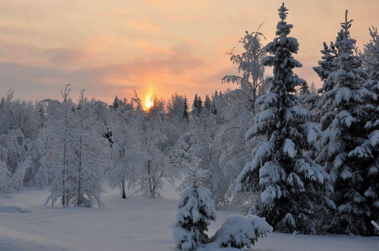 sunset winter forest trees landscape wallpaper