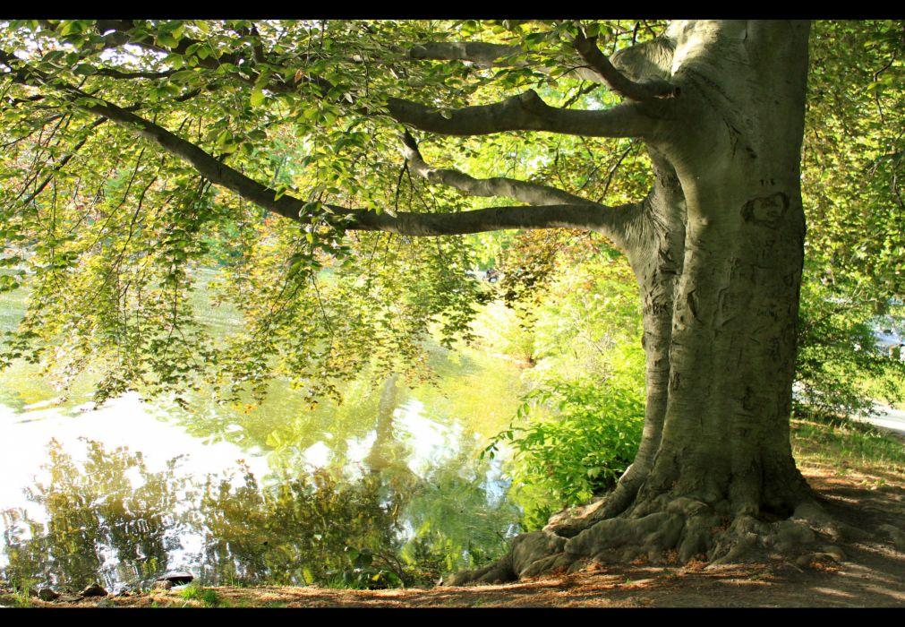 tree summer branch lake reflection       g wallpaper